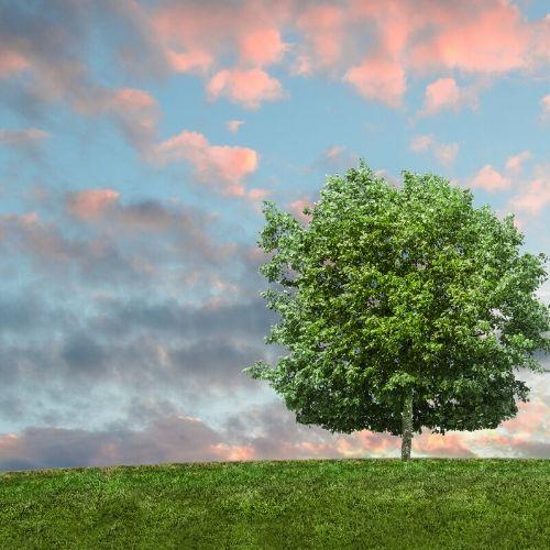 Green Living Money Saving Products