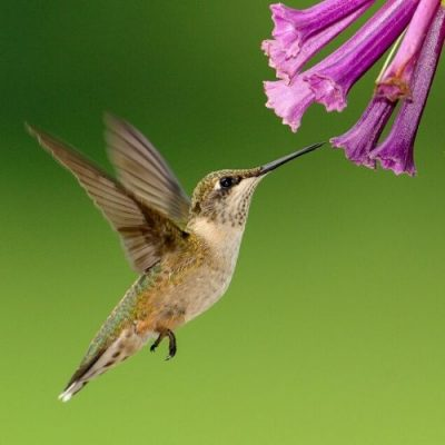 Simple & Easy Homemade Hummingbird Food