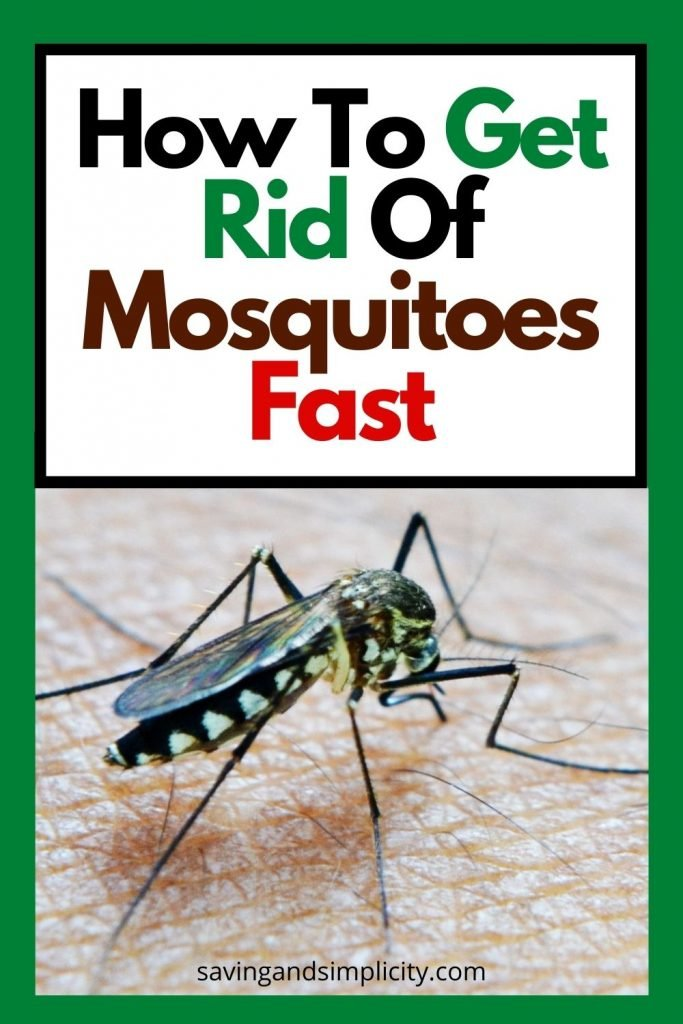 how to get rid of mosquito