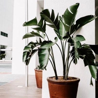 DIY planter boxes